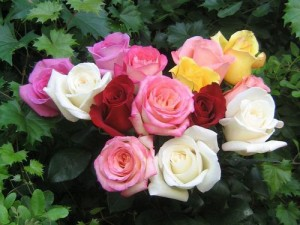 Beautiful-Color-roses-18577527-500-375